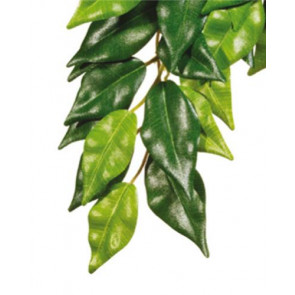Exo Terra Jungle Plants - Ficus