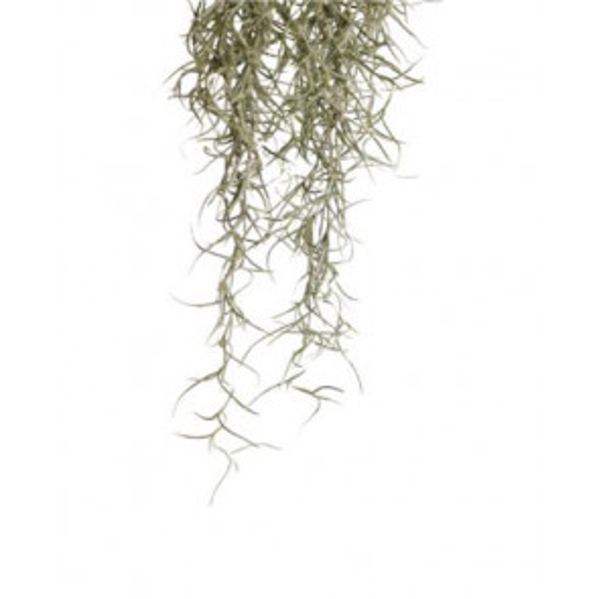 Exo Terra Jungle Plants - Spanish Moss