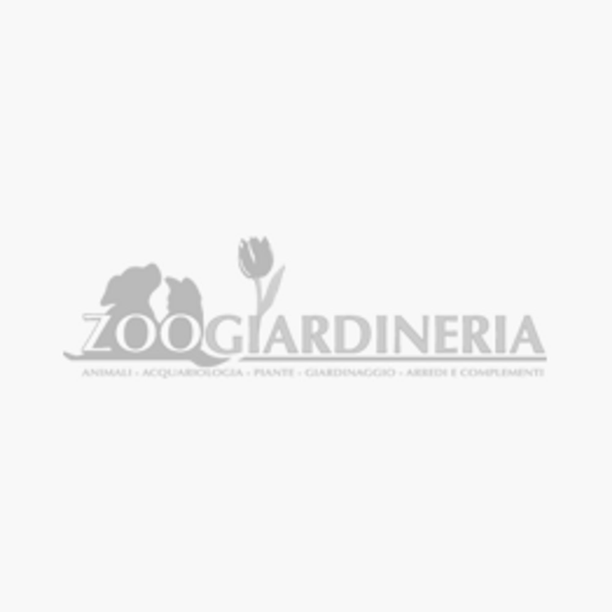 Raff Exotic con Frutta