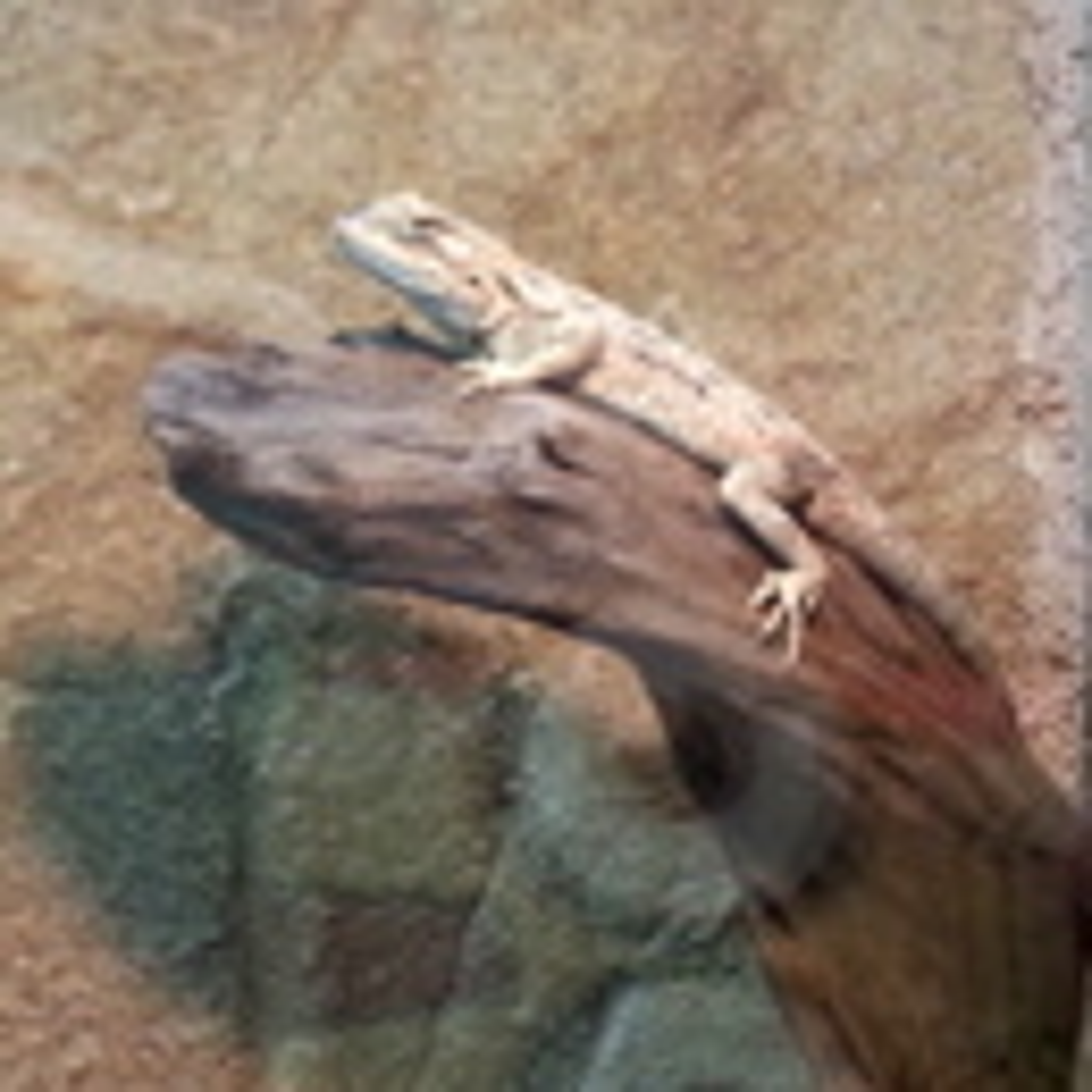 Animali - ZooGiardineria